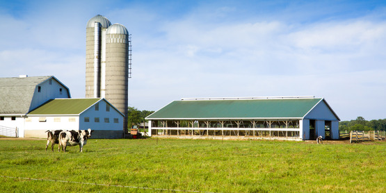 Dairy Farm Business Planning