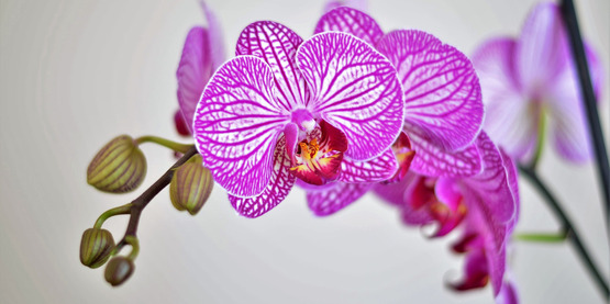 2018 Growing Orchids