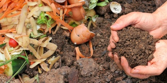 Learn how to compost!