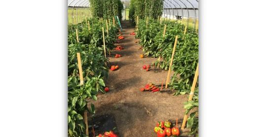 CLASS FULL!  Growing Vegetables to Sell in Northern NY
