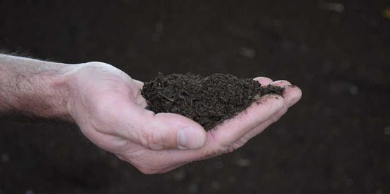 photo of a man's hand holding compost