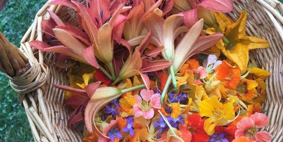 Yarrow Hollow Farm, Edible Flowers
