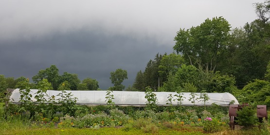 Storm Approaching the High Tunnel, Yarrow Hollow Farm. New York farmers are blessed with more than 50 inches of precipitation a year. But heavy snow can take down greenhouses and other farm structures.