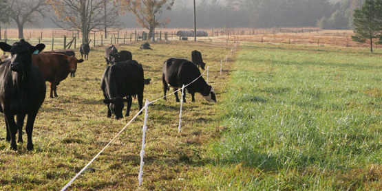 Rotational Grazing For Beginners