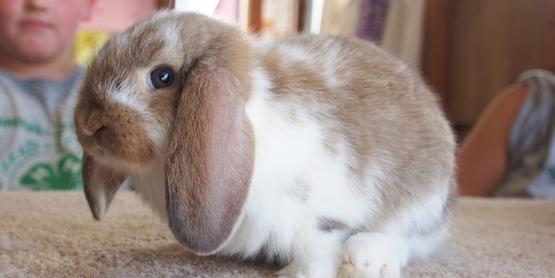 bunny 2 2019