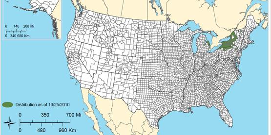 Sirex Woodwasp Map