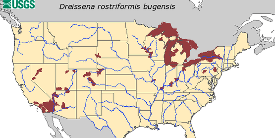 Map by USGS on HUC level record of quagga mussel in the United States
