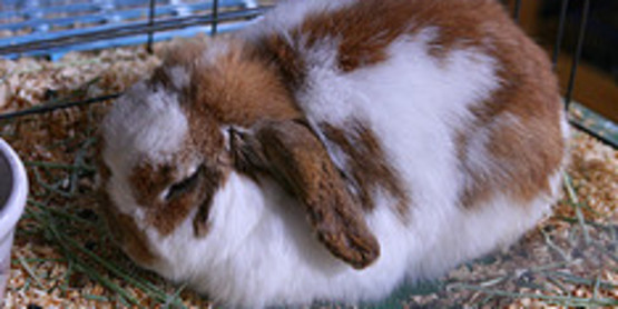 Raising Rabbits for Meat or Pets March 14, 2018