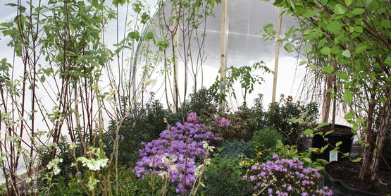 CCE Sullivan Greenhouse 2014