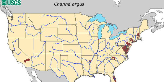 Map by USGS on HUC level record of northern snakehead fish in the United States
