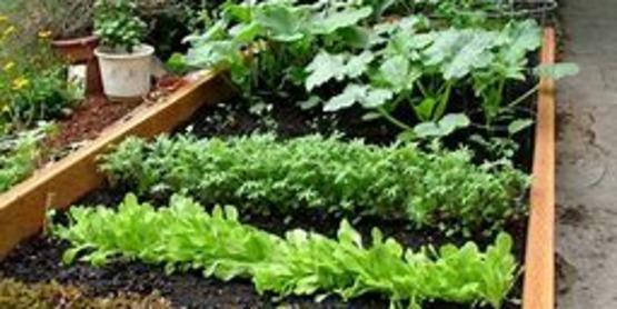 Vegetable Gardening for Success Workshop Series