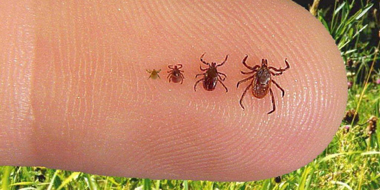 Managing Ticks on Your Property