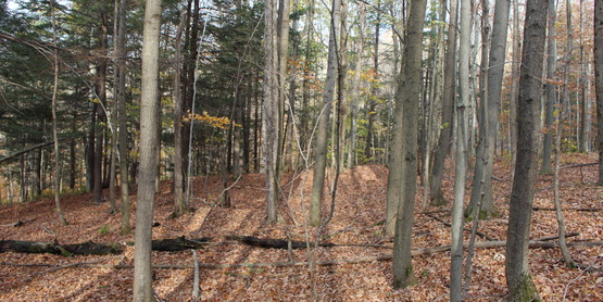 Make Money From Your Woodlot