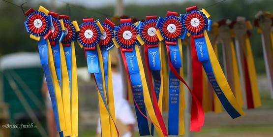 ribbons to be won at the show grounds