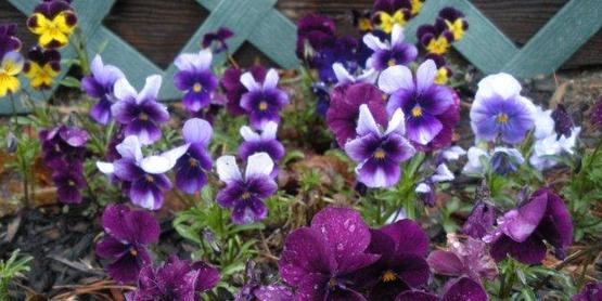 Adding Annual Flowers to Your Garden