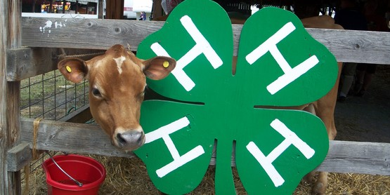 Dairy & 4-H