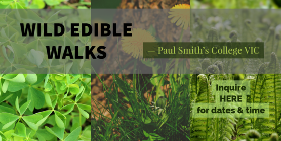 Wild Edible Walks