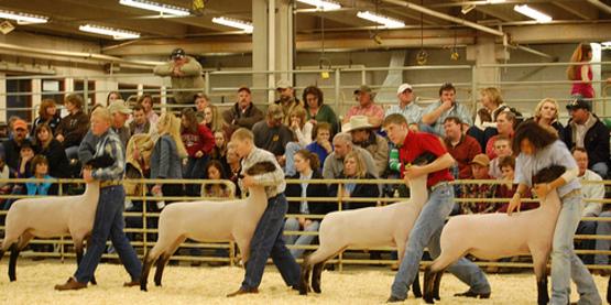 4-H Sheep Clinic - Saturday, May 19