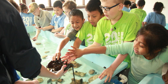 Kids having fun with marine animals in the touch tank room