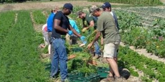 Do you work with veterans on farms in New York?