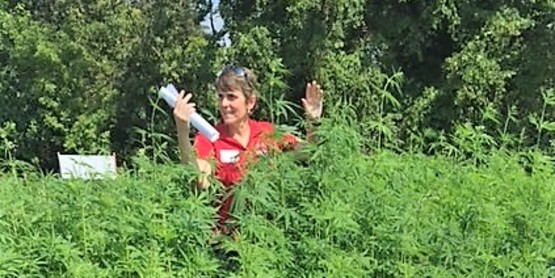 Dr Chris Smart in Hemp Field