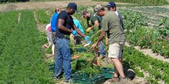 Veterans on Farms Training