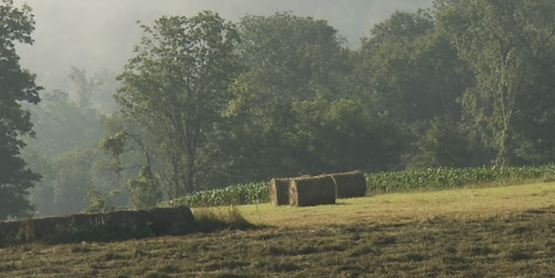 Bales of Hay, Forgotten Farms movie