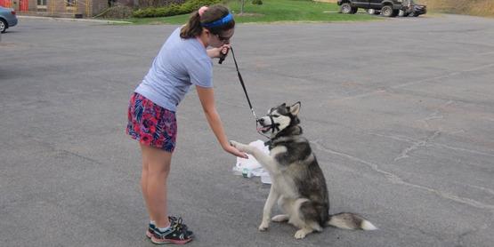 Dog Obedience Tips & Tricks