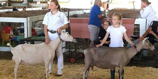 Youth Dairy Goat Showmanship