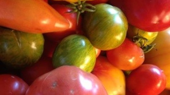 Presentation: Growing Tomatoes