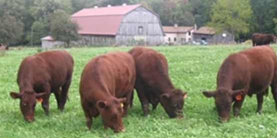 Pasture Walk to Focus on Soil Health Saturday, May 12, 2018 11:30 am to 2:30 pm