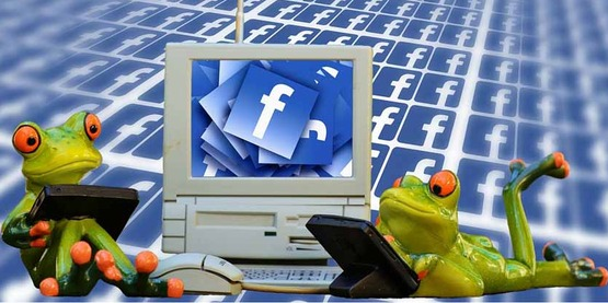 cartoon frogs with a computer on Facebook; internet
