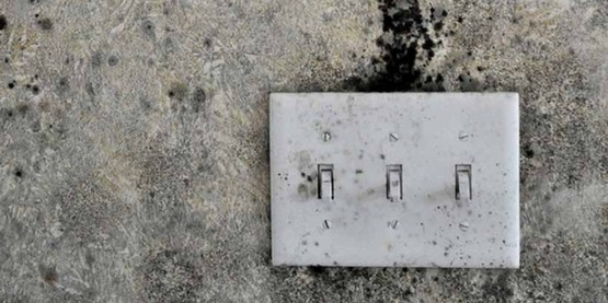Mold grows above a switch plate in a flooded home