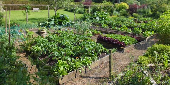 Tips for a Successful Vegetable Garden