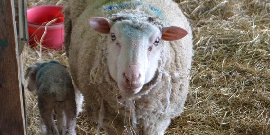 Learn to Shear