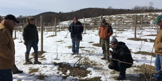 Employees at a grape pruning workshop.