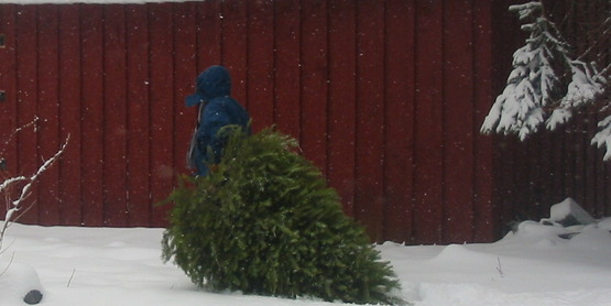 Christmas tree in front of snow covered barn