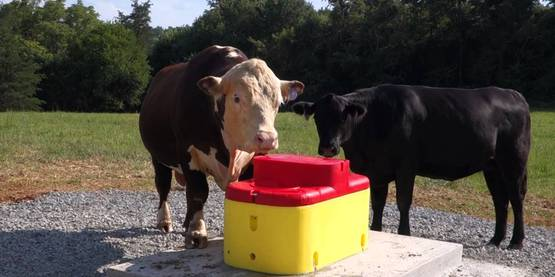 Farm water cattle
