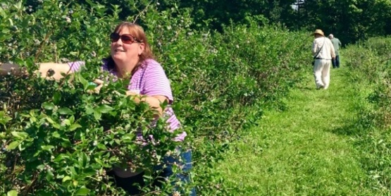 Stephanie Lawrence picking blueberries