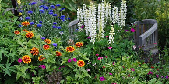 Using Annuals in the Perennial Garden