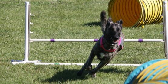 Watch her go! dog agility