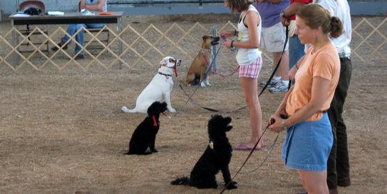 Dog training class, Ithaca NY.
