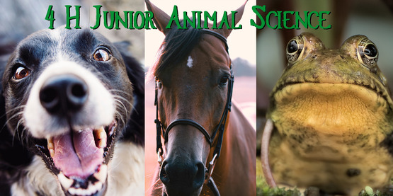4-H Junior Animal Science Program
