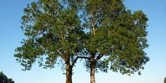 CRISP Training: Monitoring & Managing Ash Trees