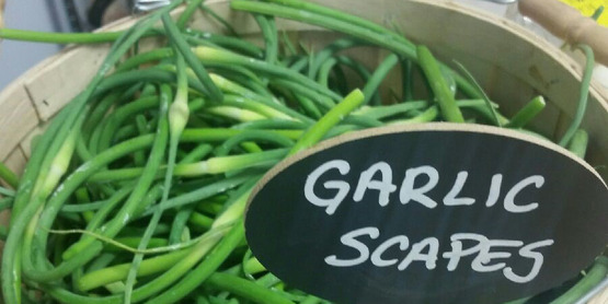 Garlic scapes donated by the Hudson Valley Farm Hub on display at Florida Community Food Pantry.
