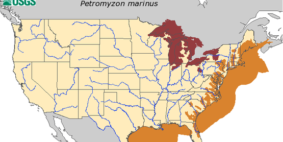 Map by USGS on HUC level record of sea lamprey in the United States