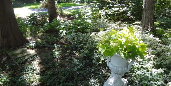 Shade garden at Sue and Jan Suwinski's