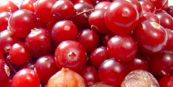 Cranberry Delight