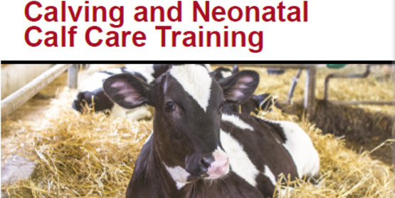 Cornell CALS PRO-DAIRY Calving and Neonatal Calf Care Training