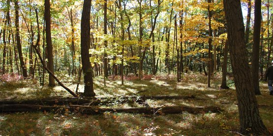 manage your woodlot...